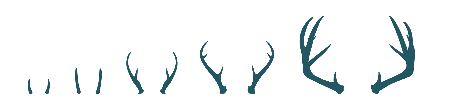 Png antlers. Axe creative group making