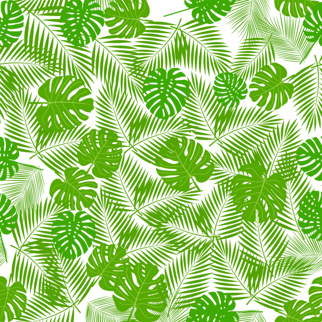 Png background images free download. Tropical leave with leaf