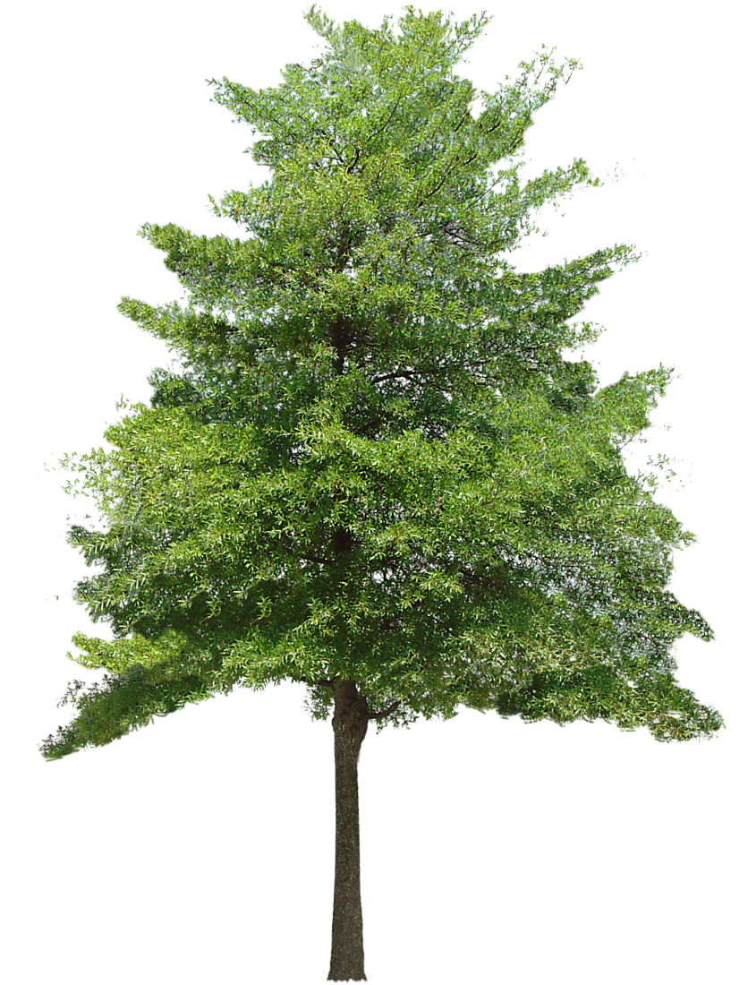 Tree images free icons. Forest pine trees png graphic black and white download