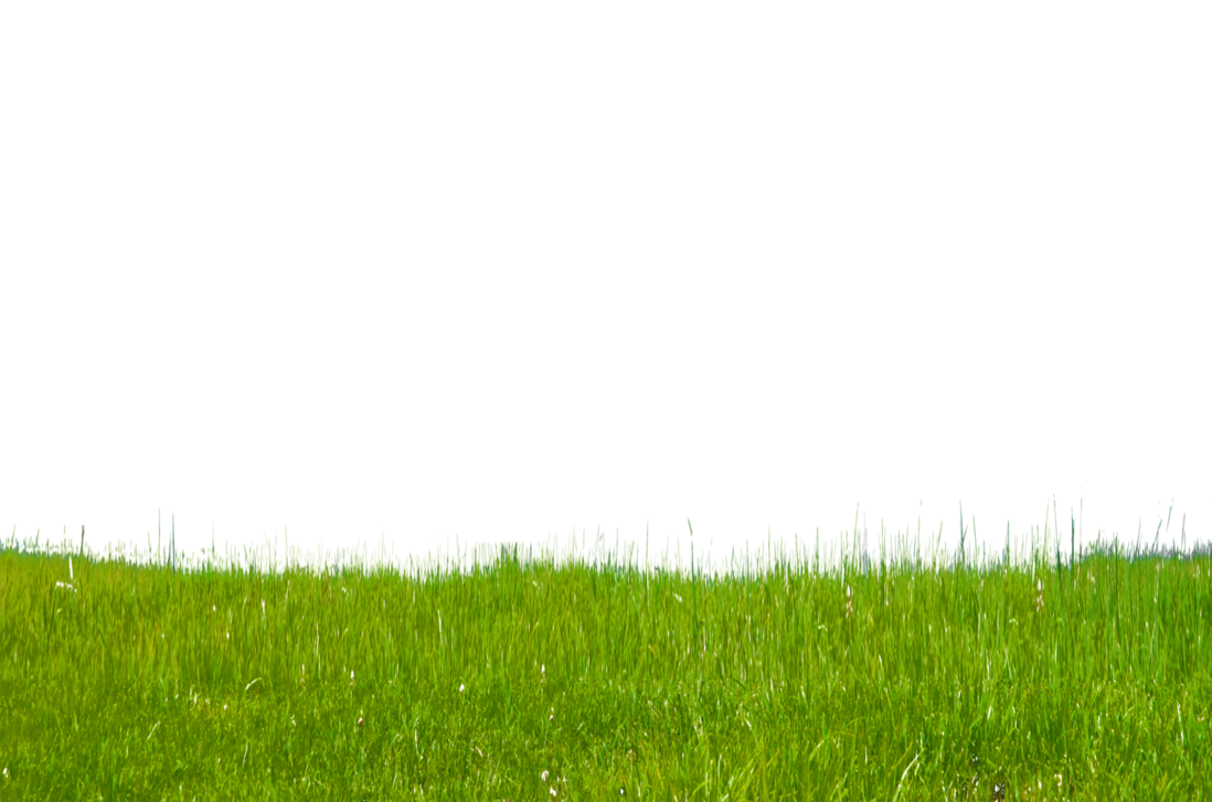 Grass png. Transparent images all free