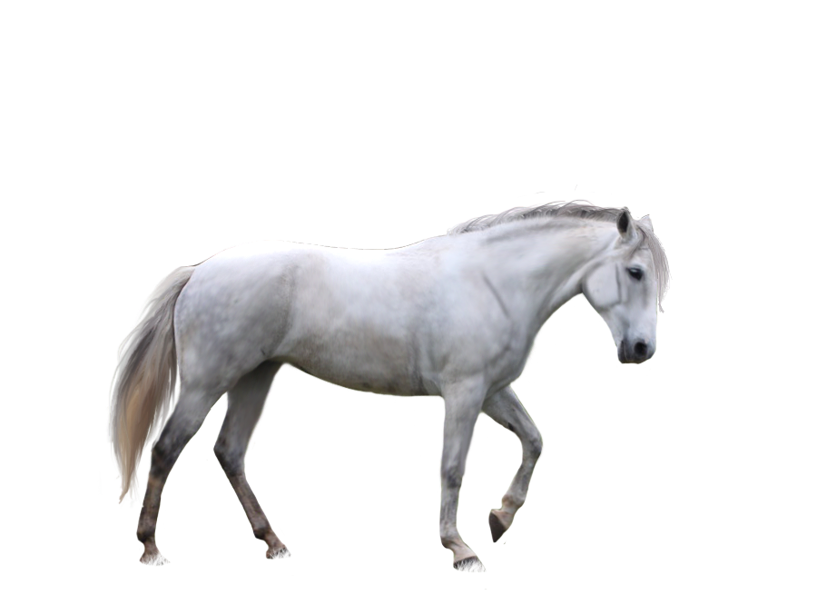 horse tail png