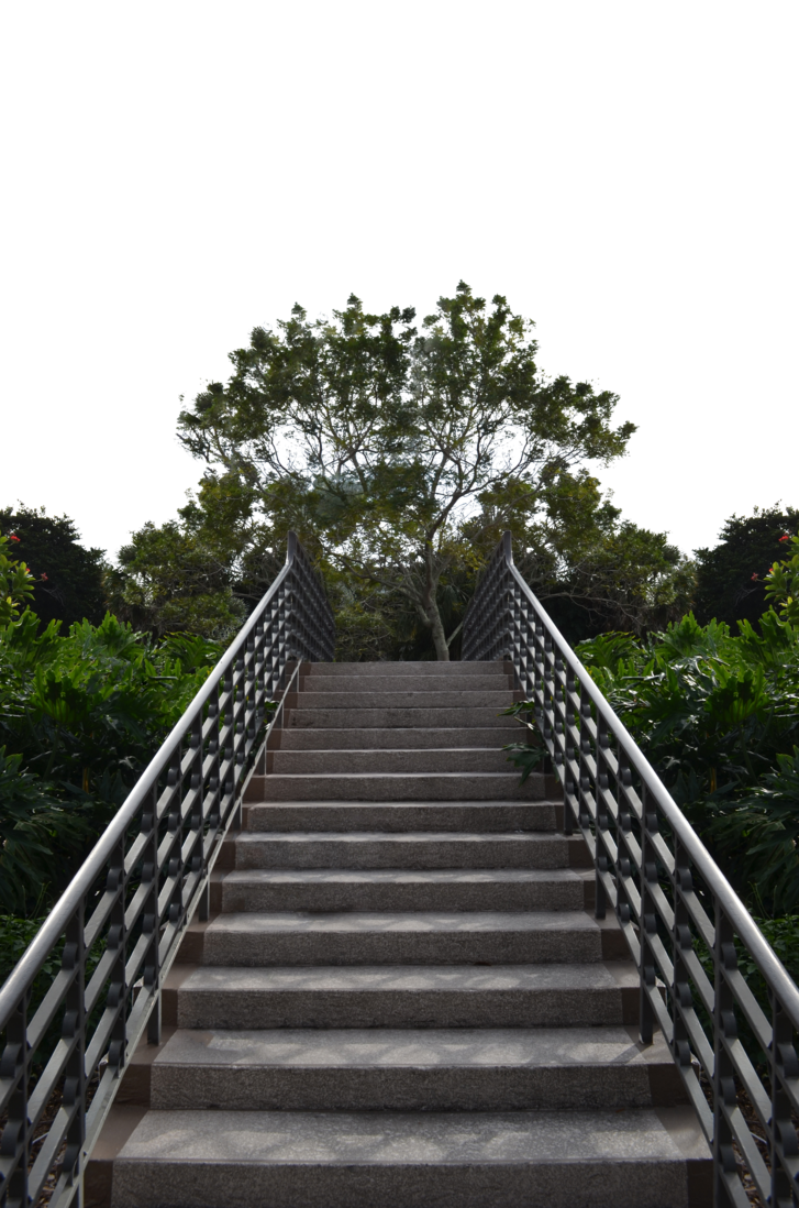 Staircase in forest stock. Png background hd clip art freeuse library
