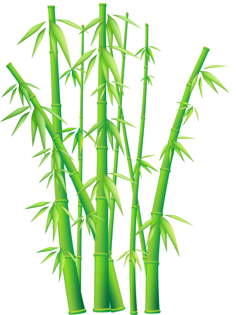 Png bamboo. Free images toppng transparent