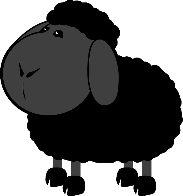 Clip tag sheep. Black ancestors rooted in