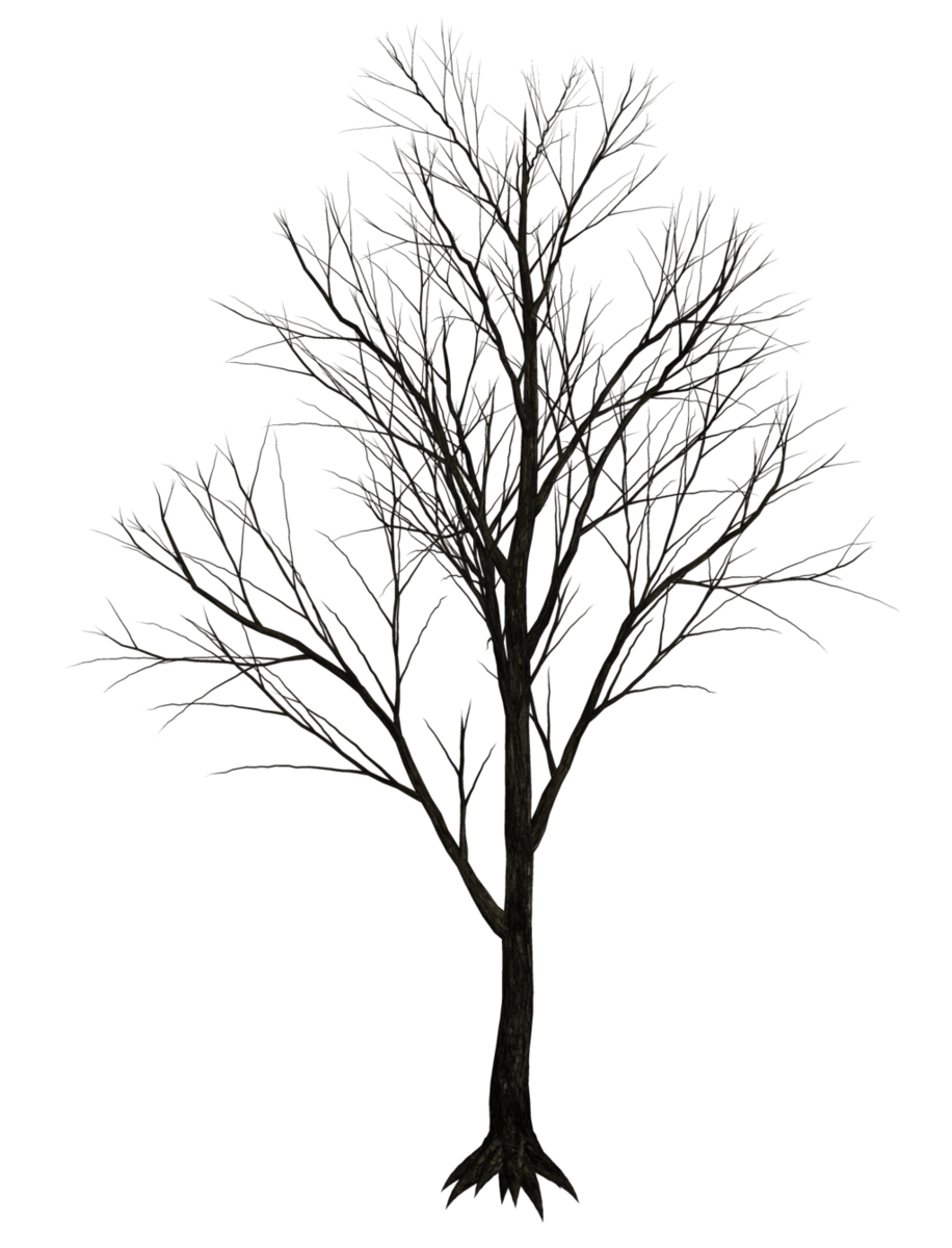 Trees without leaves png. Dark stock by jumpfer