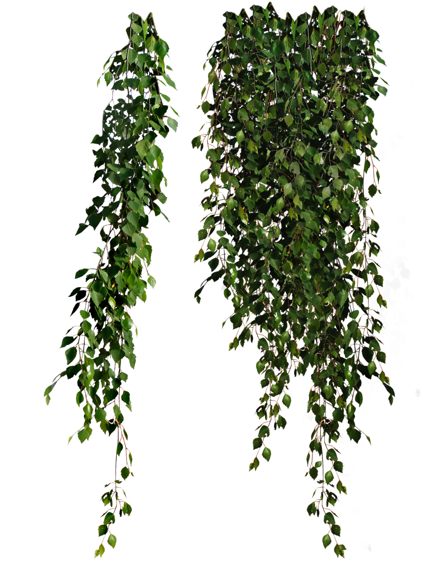 Green plants png. Transparent images pluspng image