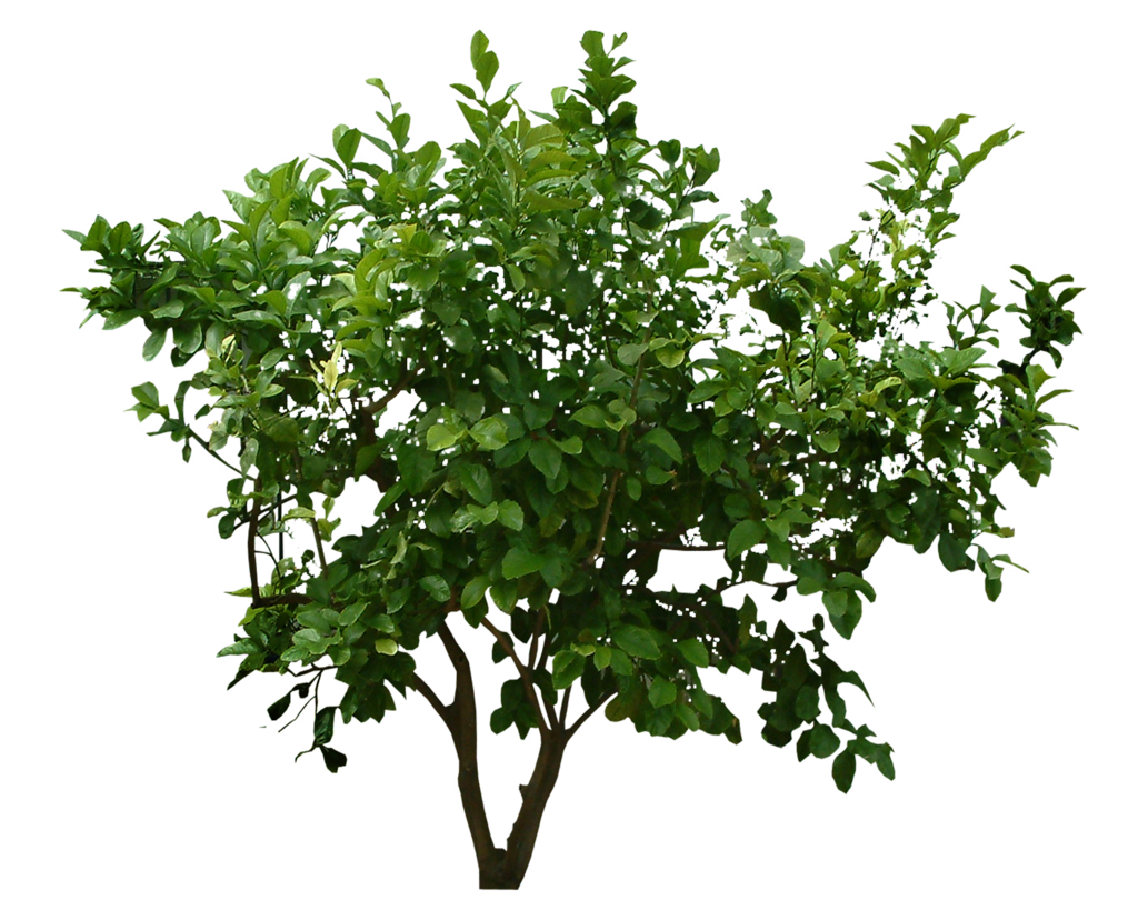 Png bushes. Images transparent free download