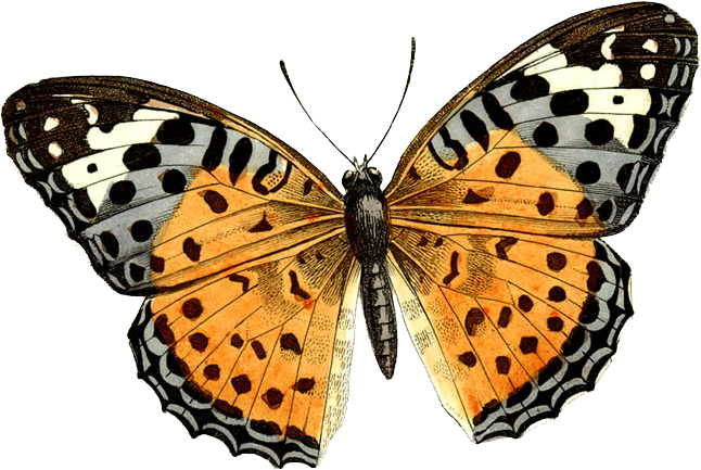 Png butterfly. Image free picture download