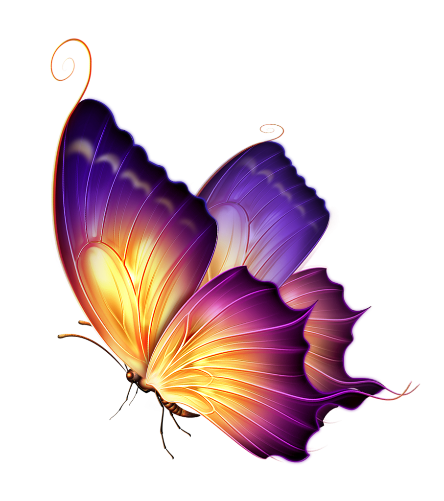 Png butterfly. New editing download hd
