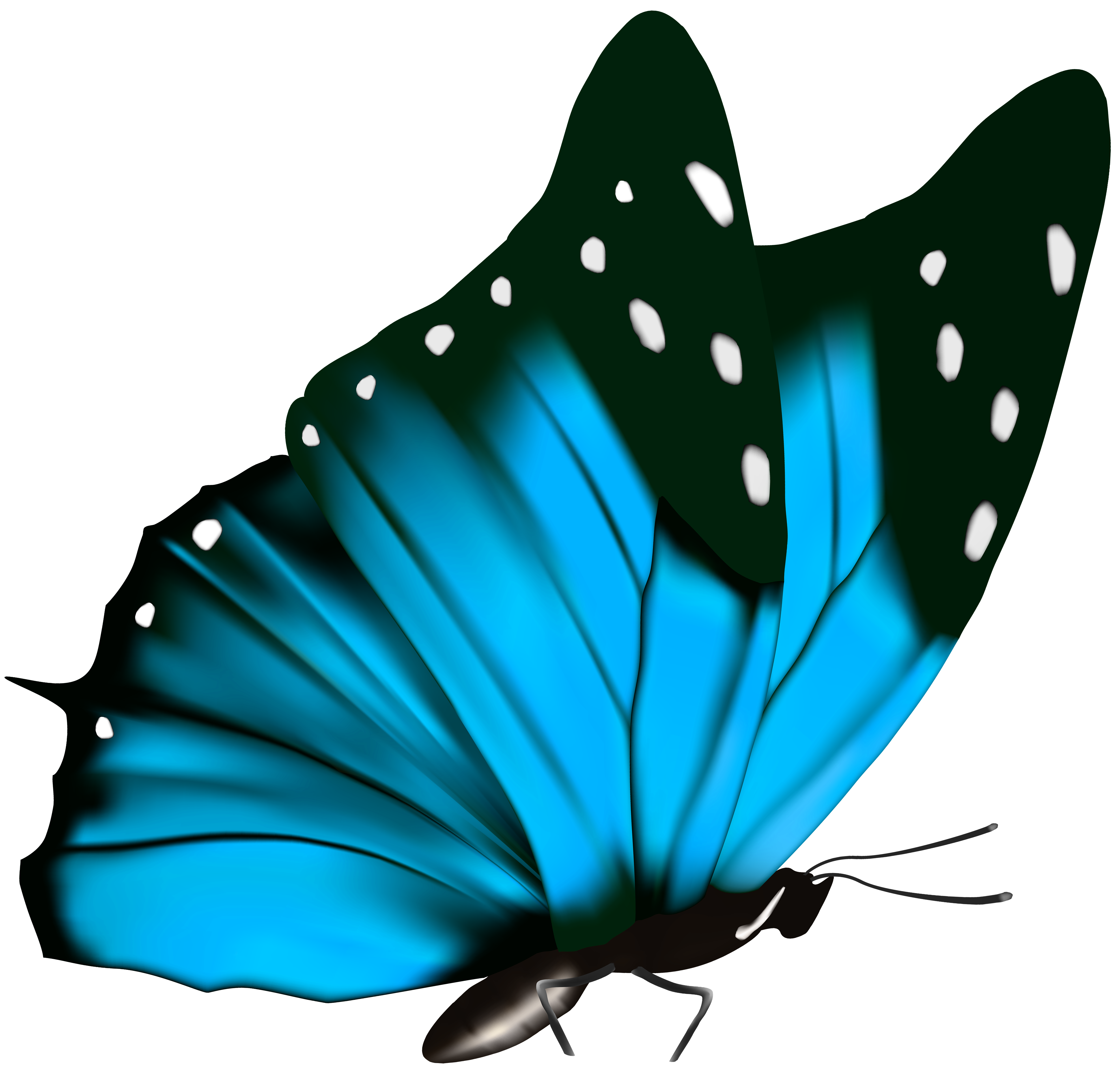 Png butterfly. Clipart image gallery yopriceville