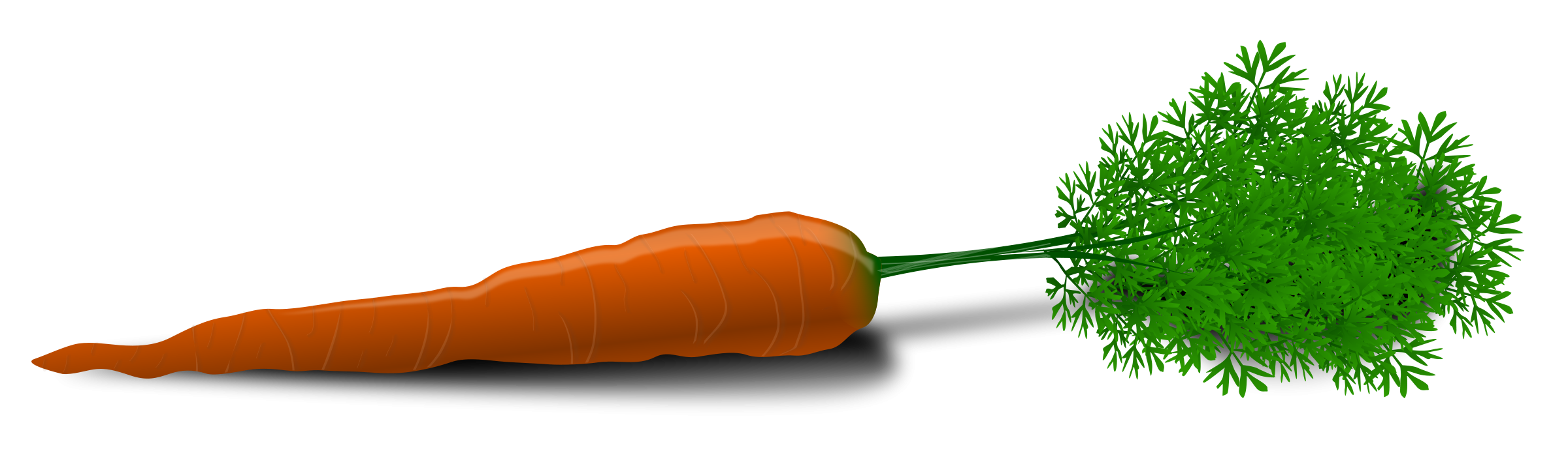 Png carrot. Image free download