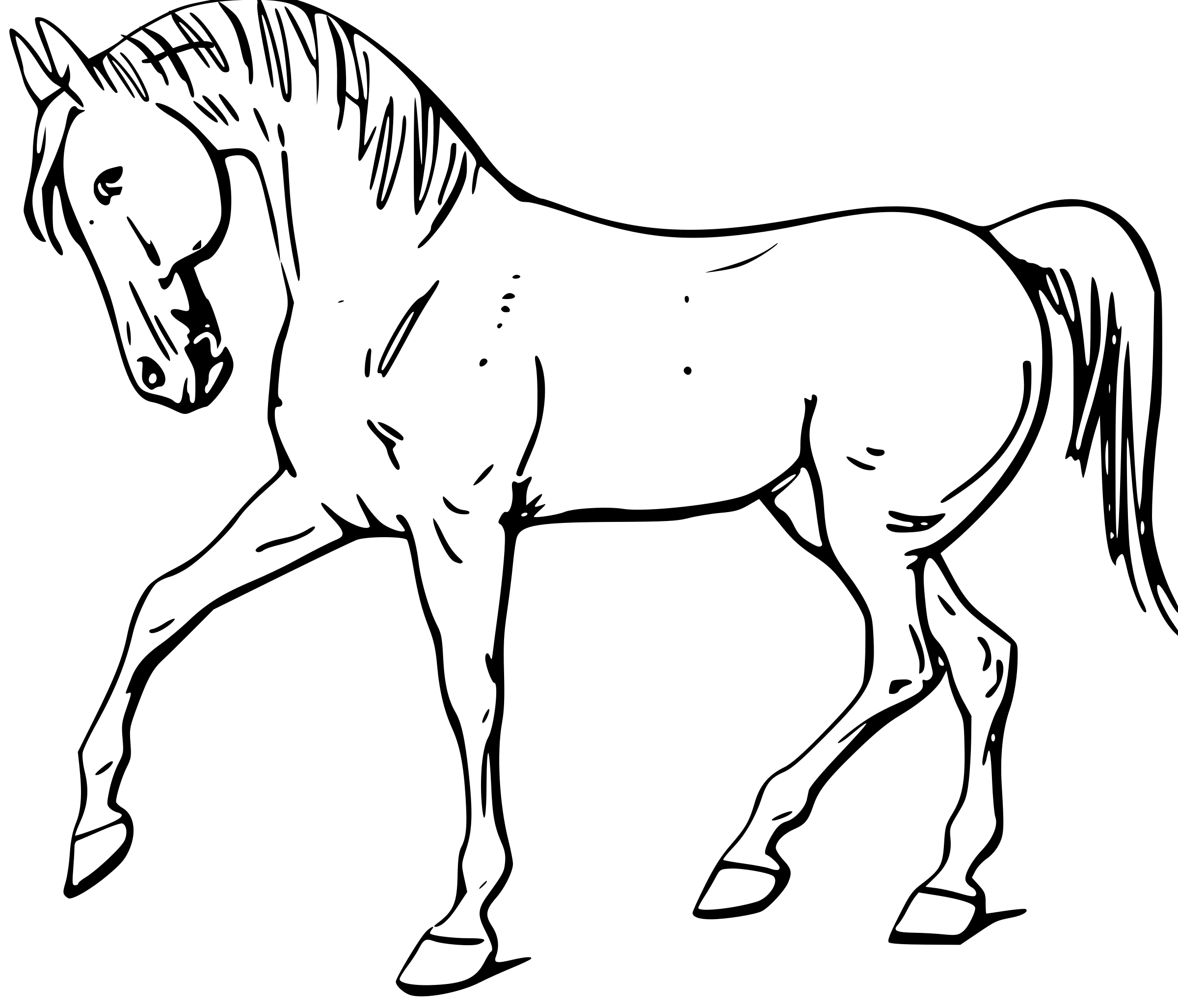 Png clipart white horse hind legs. Drawing outlines at getdrawings