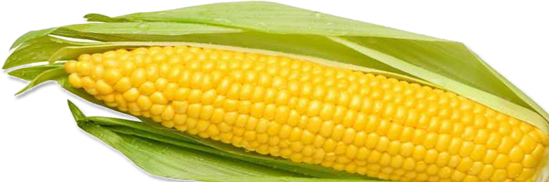 Png corn. Images download yellow image