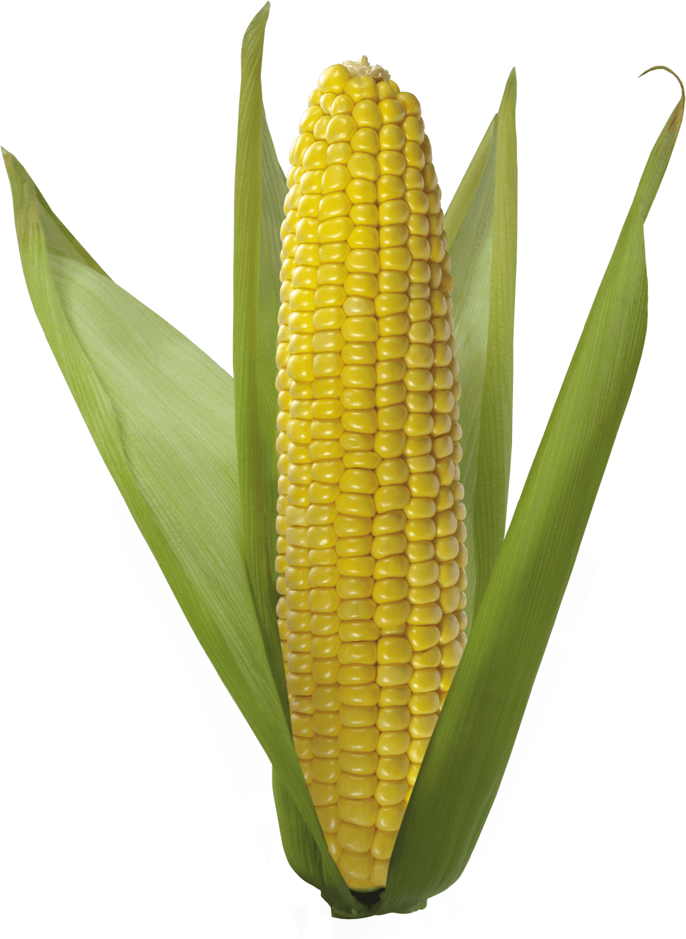 Png corn. Open transparent stickpng