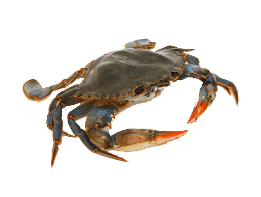 Png crab. Free images toppng transparent