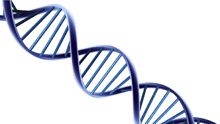 Png dna. Images free download