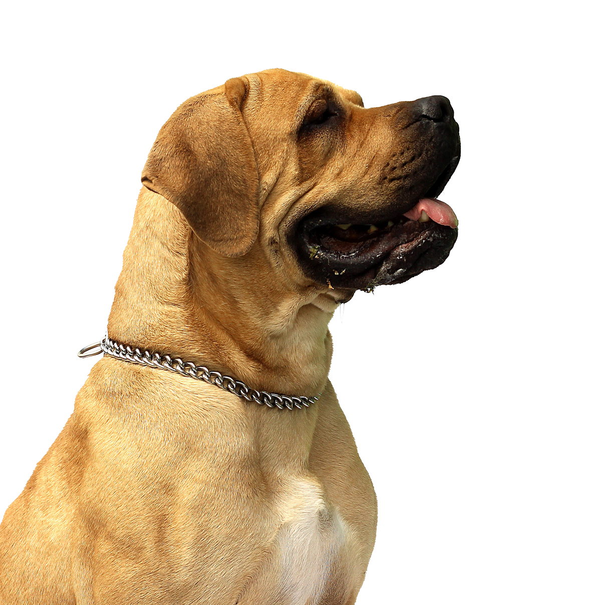Png dog. Image dogs puppy pictures