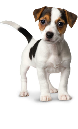 Png dog. Vector free icons and