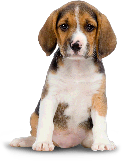 Hd transparent images pluspng. Dogs png clipart black and white stock