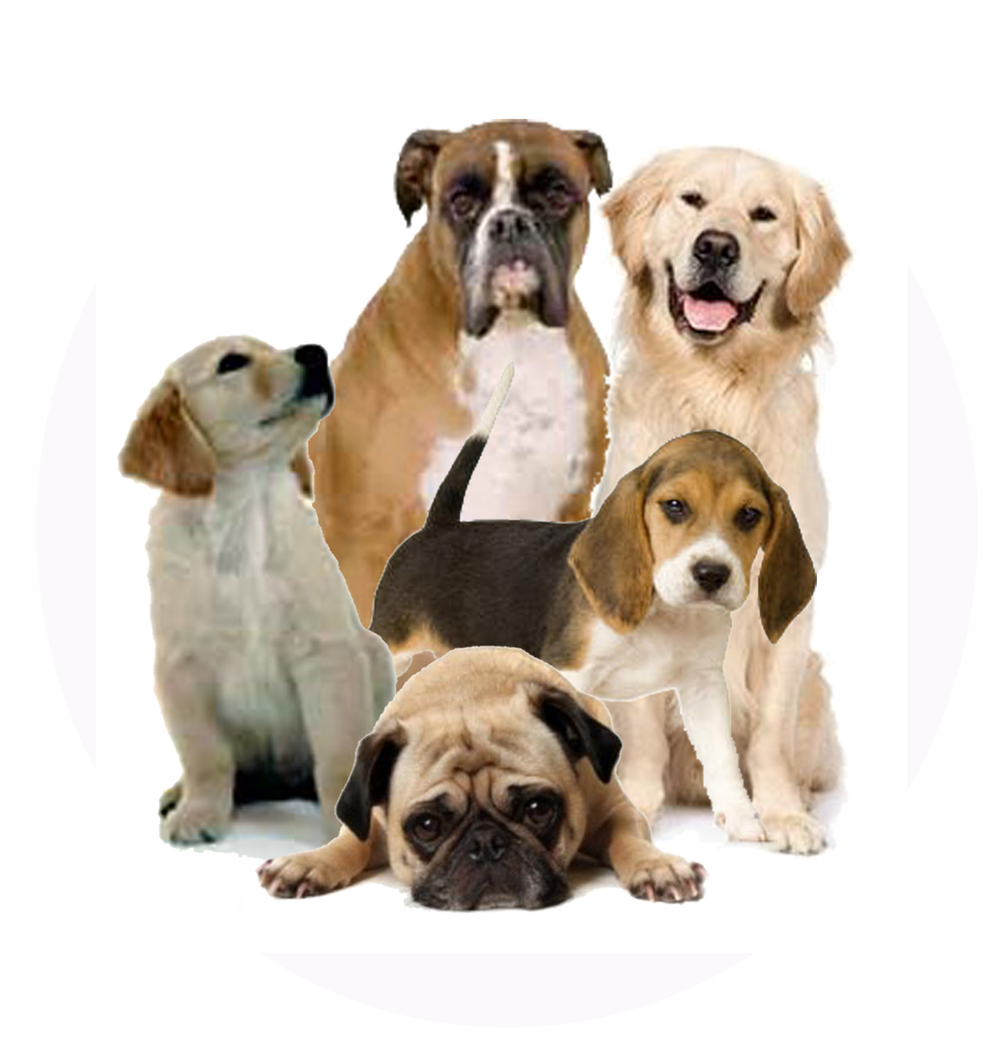 Dog transparent pictures free. Dogs png clipart freeuse stock