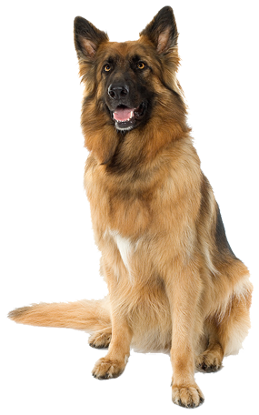 Hd transparent images pluspng. Png dogs png free library