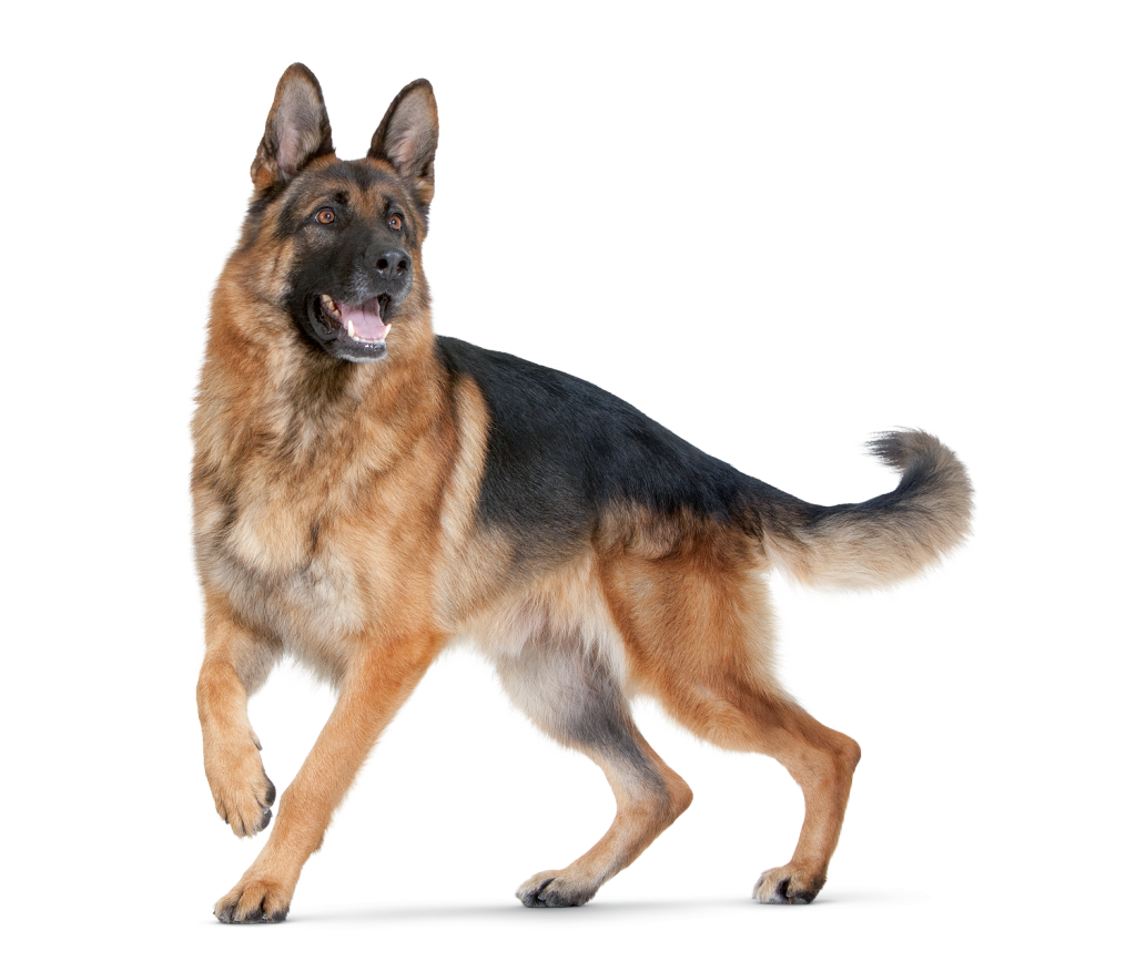 Dog image puppy pictures. Png dogs clipart freeuse stock