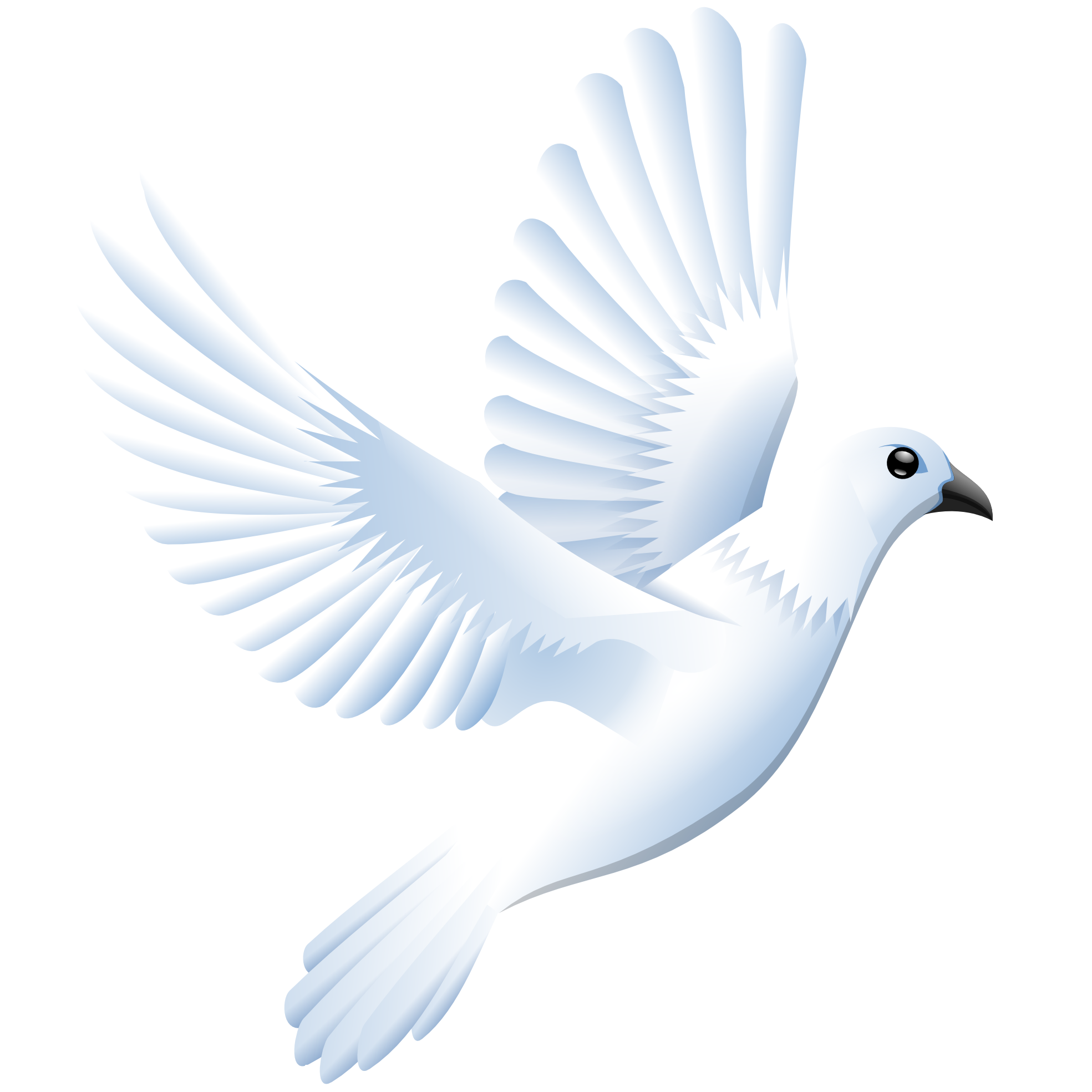 Png dove. Transparent pictures free icons