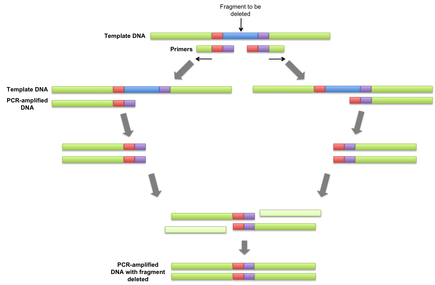 Png extension viewer. File overlap pcr wikimedia