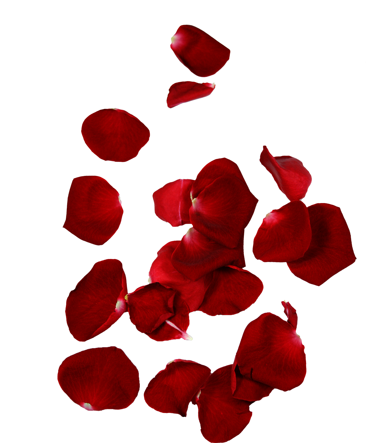 Png falling flower petals. Rose hd quality free