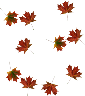 Png falling leaves overlay. Brick text surreal typography