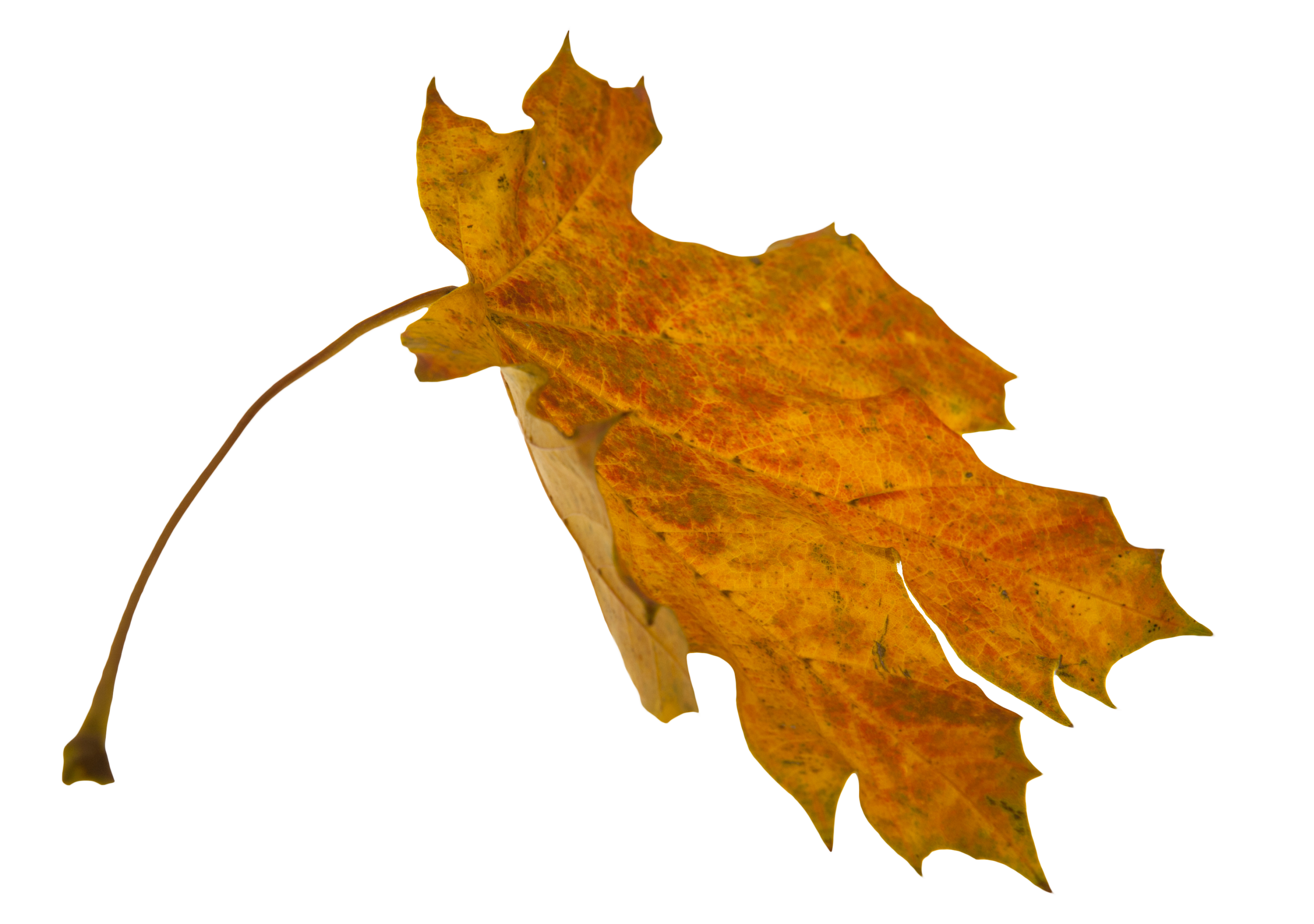Png falling leaves overlay. Leaf overlays turn your