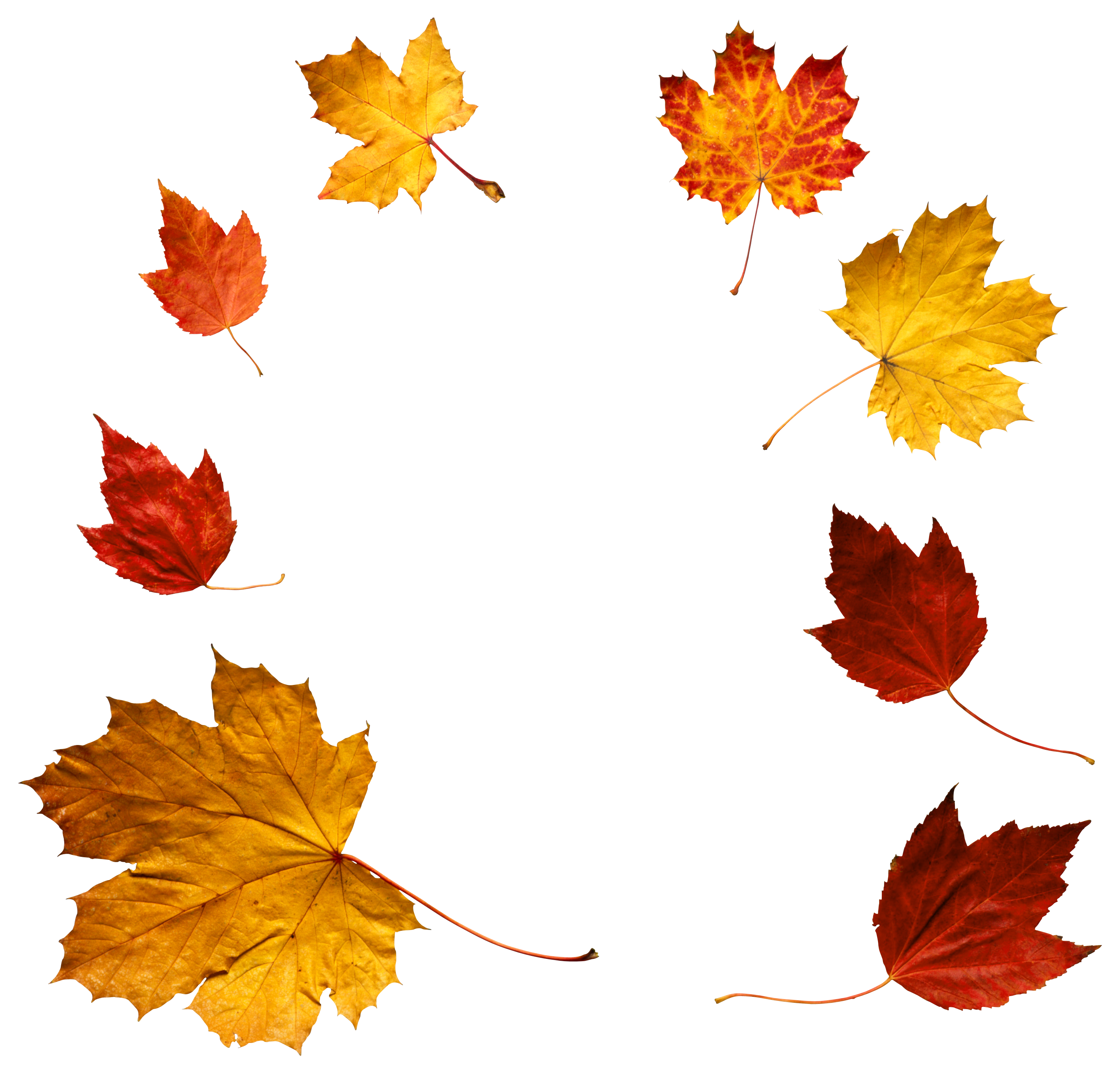 Png falling leaves overlay. Autumn clipart gallery yopriceville