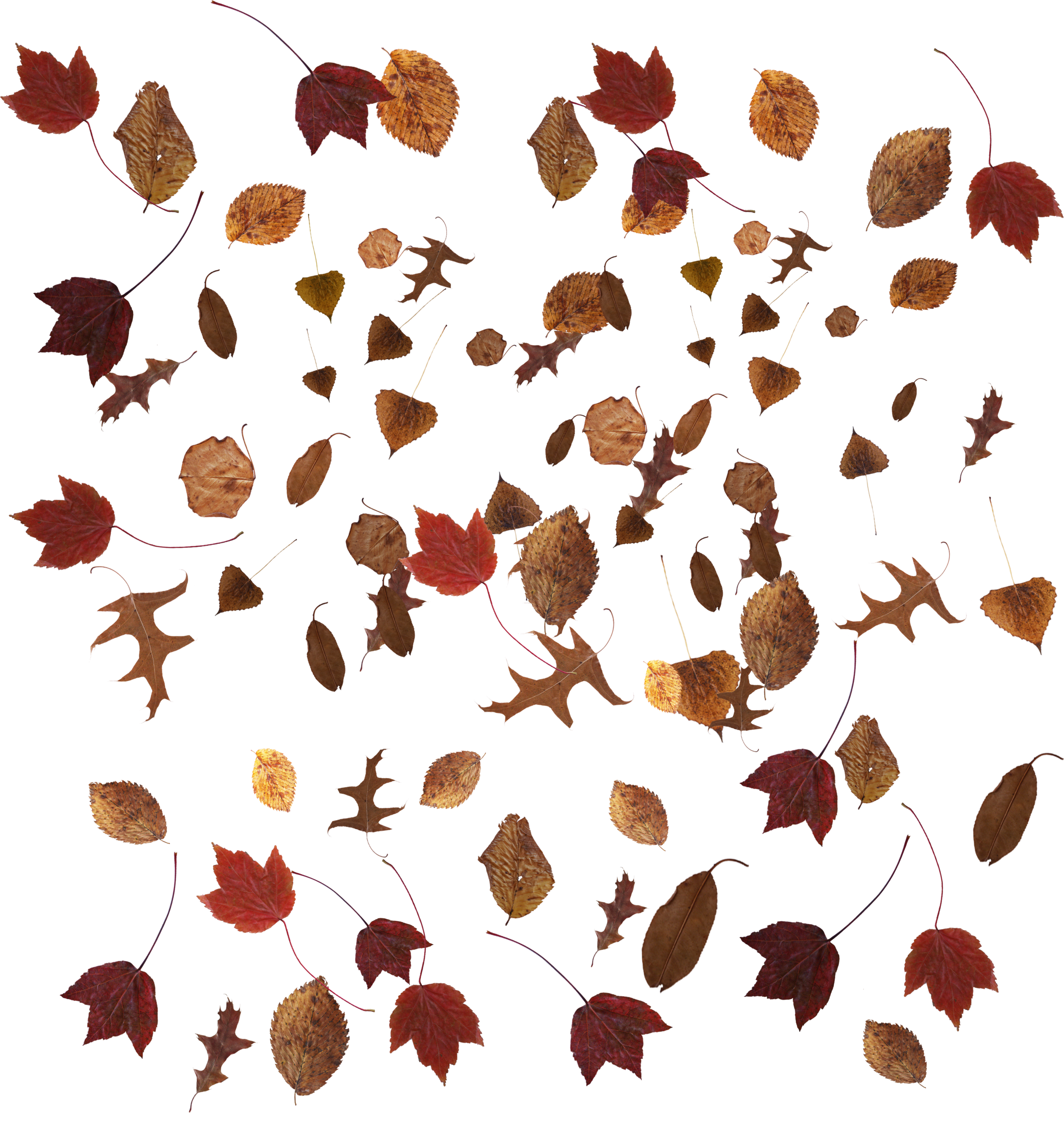 Leaves overlay png. Free leave download chasing
