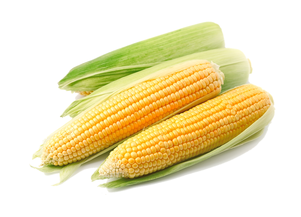 corn png clear background