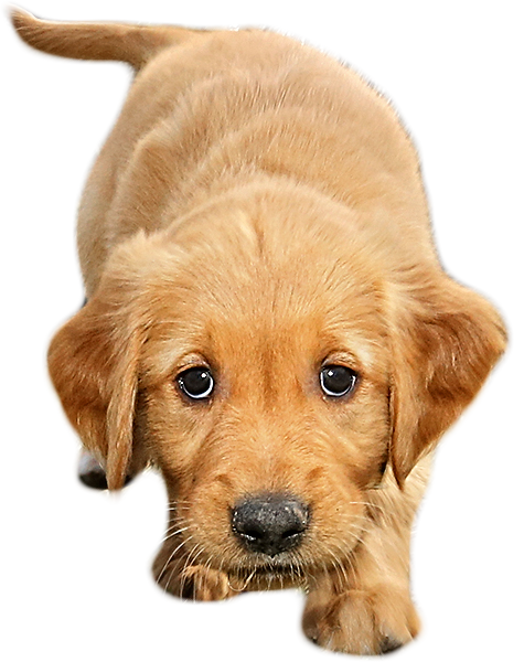 Png files with transparent background. Special puppy images jwpictures