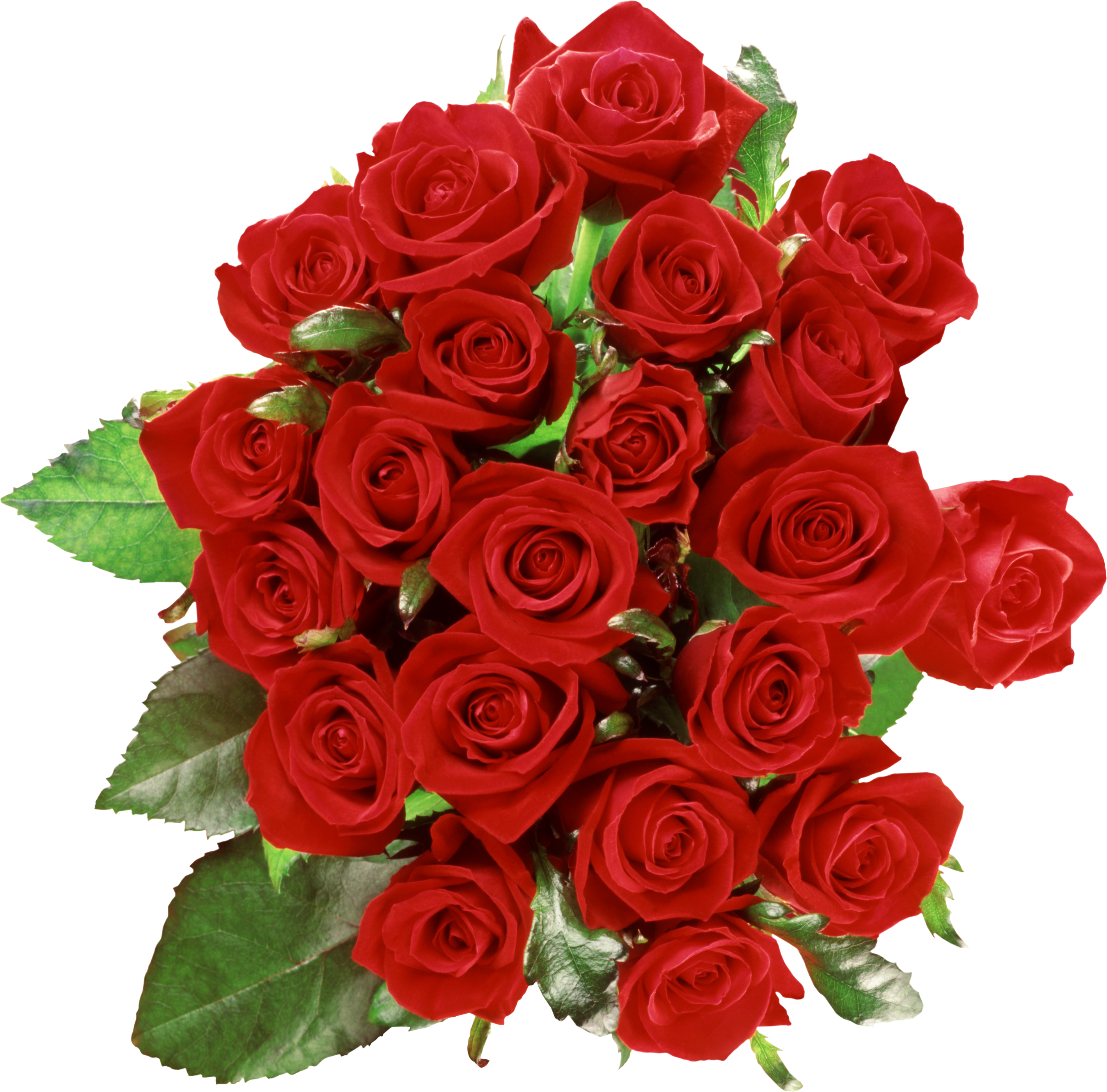 Rose flower png. Bouquet roses flowers transparentpng