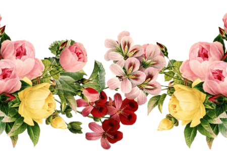 Png flower images with transparent background. Blue flowers the are