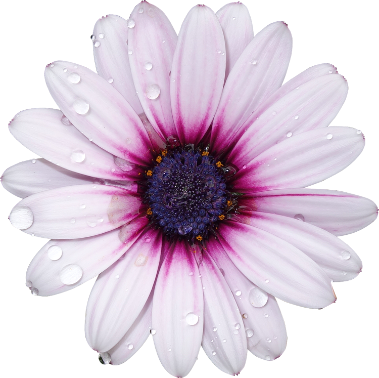 Freetoedit flower with a. Flowers transparent png picture royalty free library