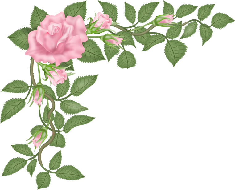 Png flower vector. Flowers rosa pinterest and