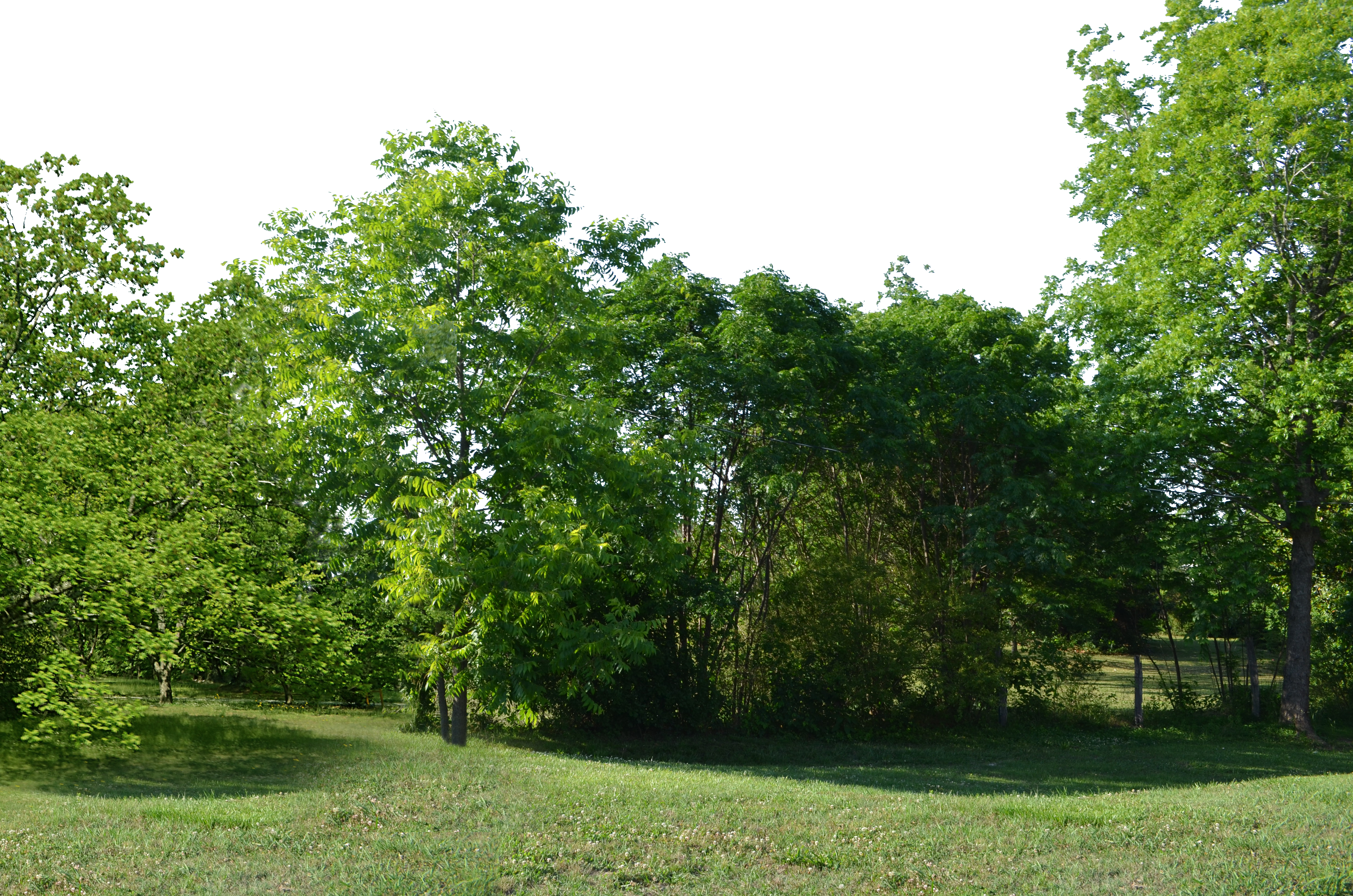 Png forest. Clearing background stock photo