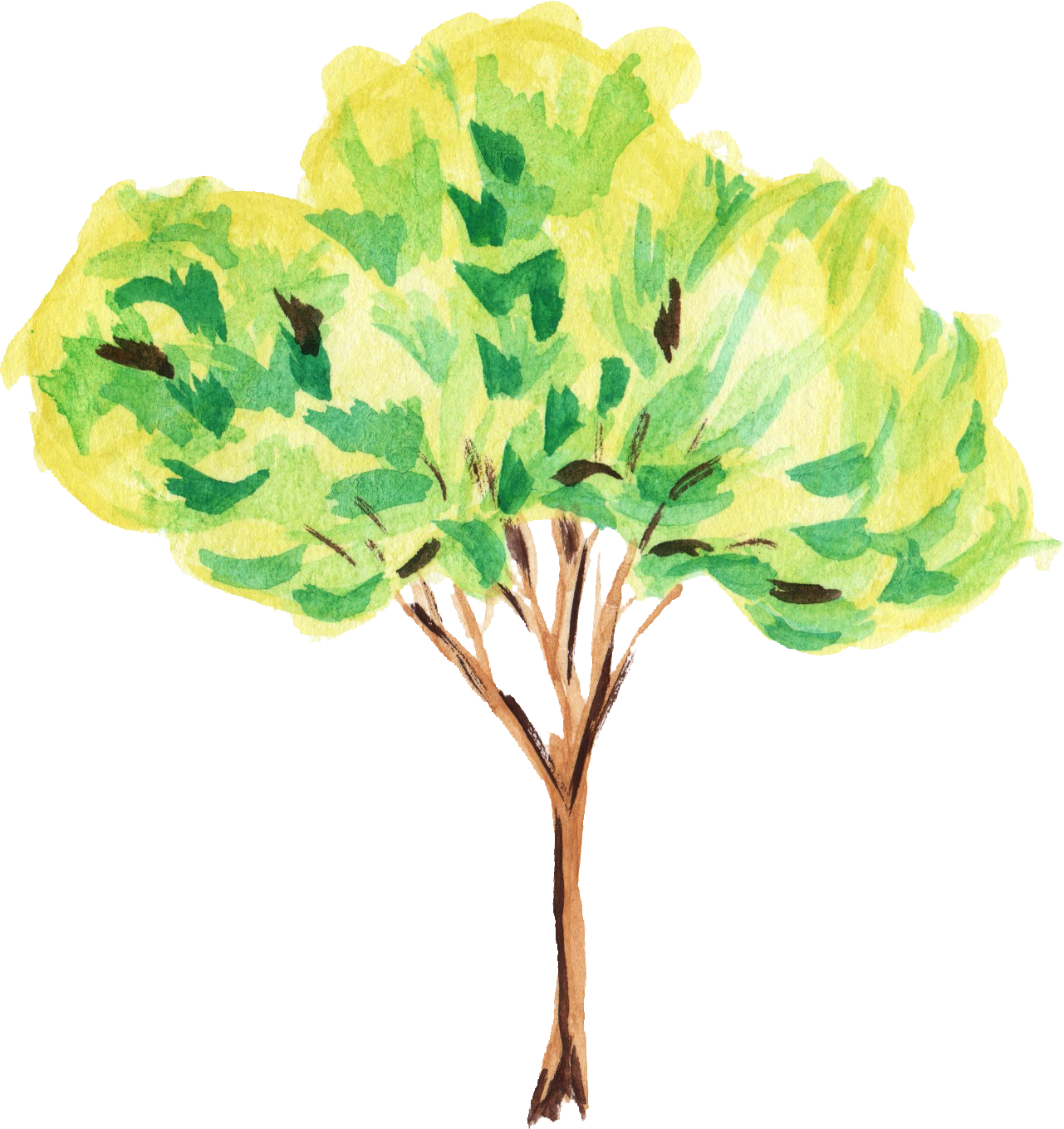 Png format free download. Watercolor tree transparent