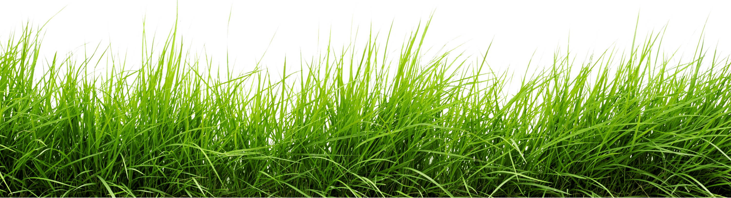 Png grass. Line of image purepng
