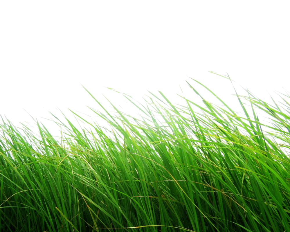 Png grass. By moonglowlilly on deviantart