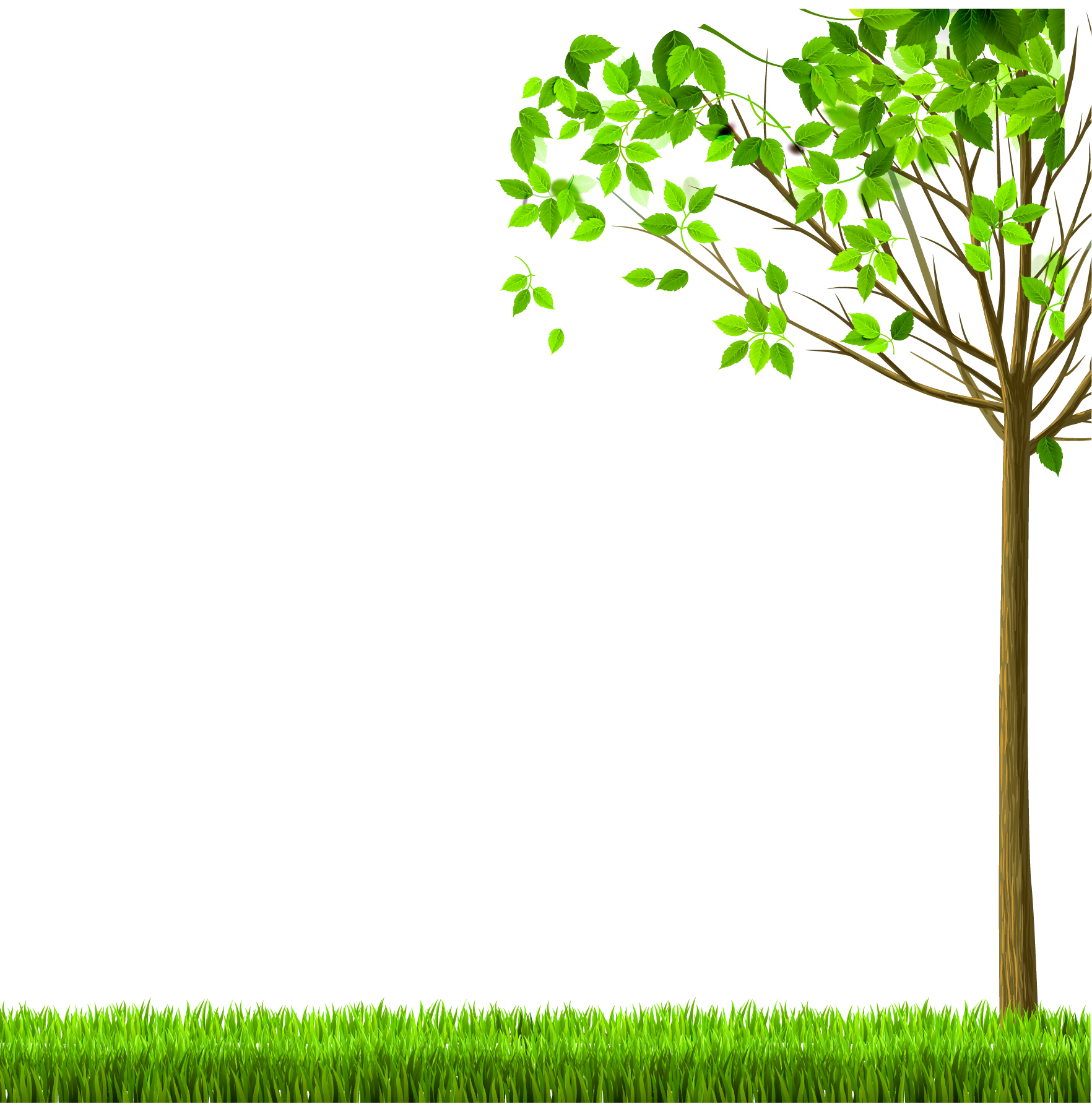Transparent free images only. Nature png graphic library download