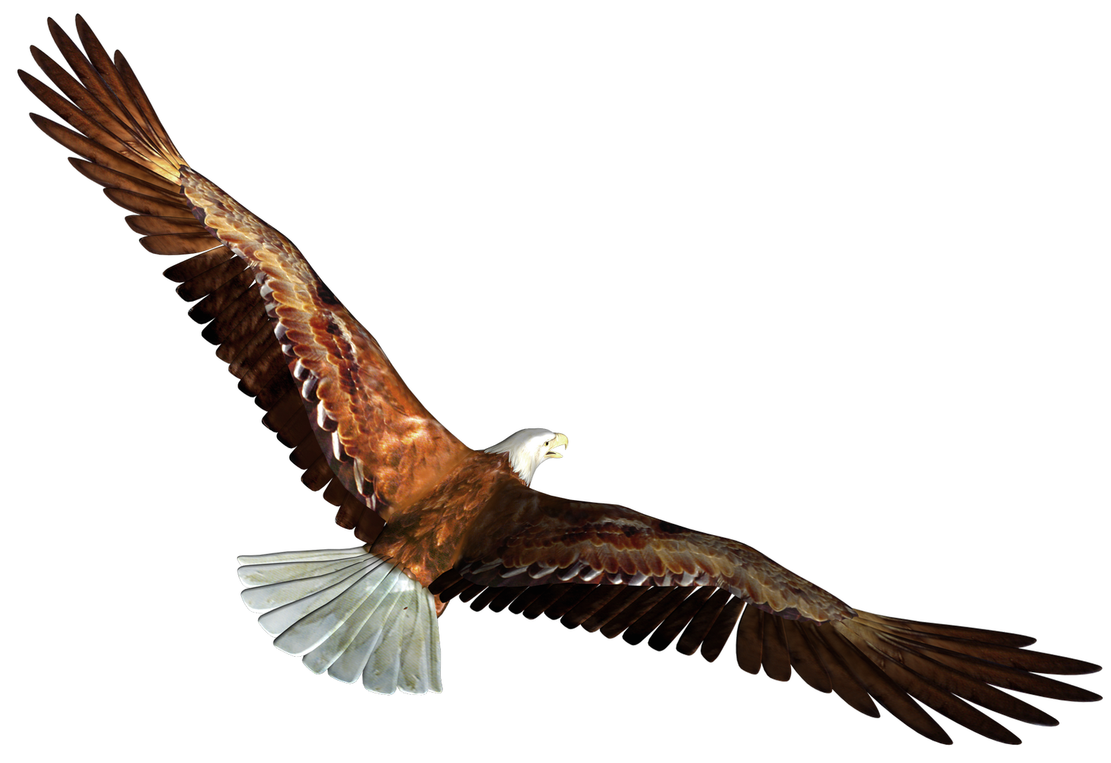 Eagle soaring png. In flight transparent picture