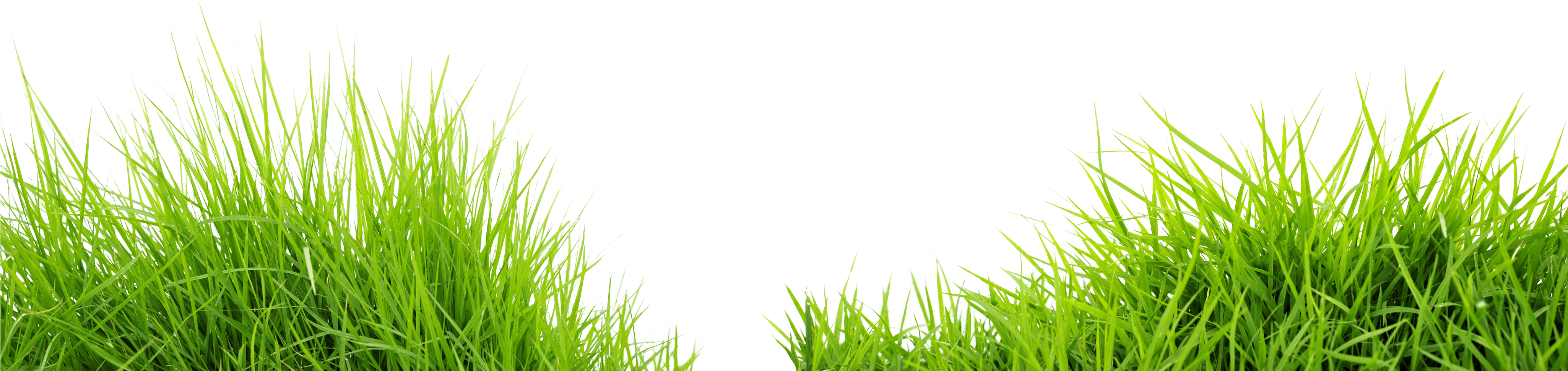 Png images download. Grass transparent pluspng image