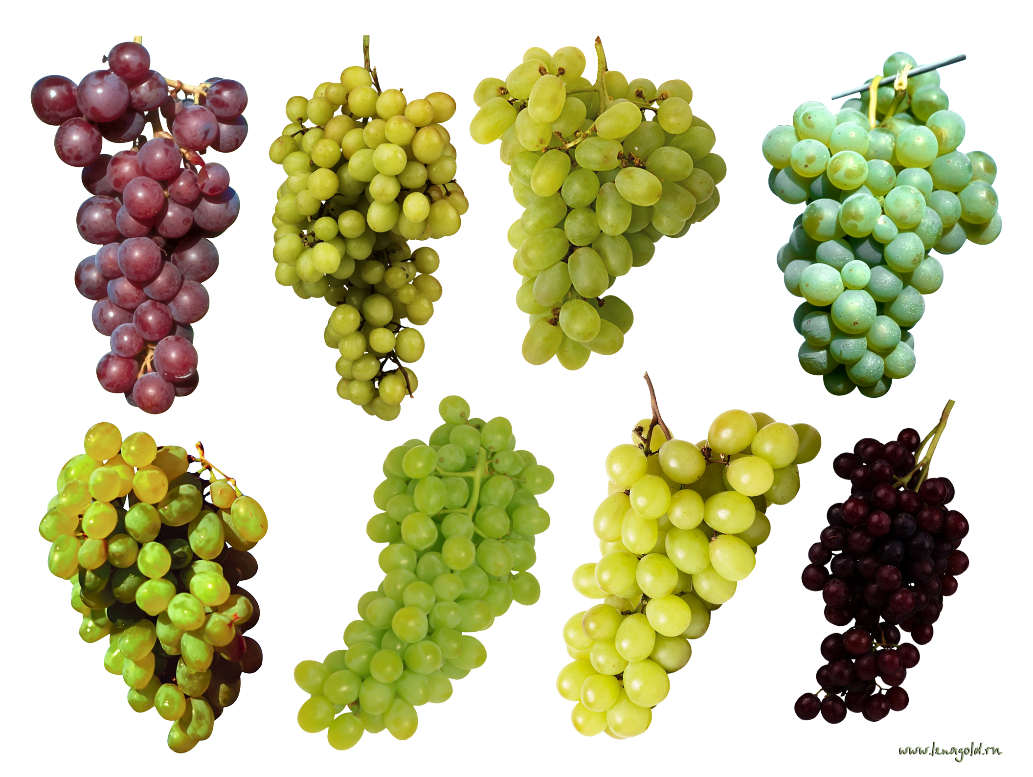 Png images download free. Grape image picture