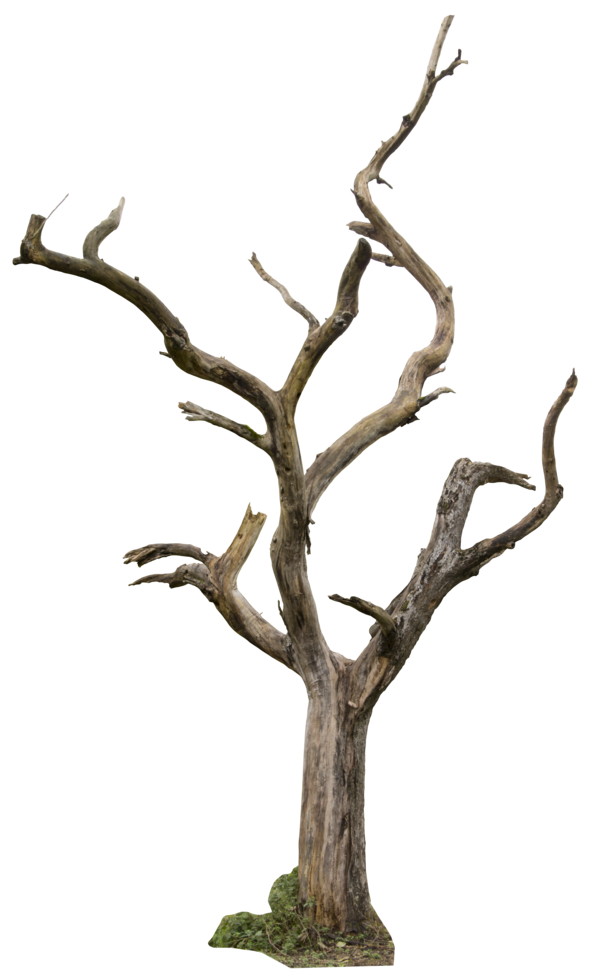 Png images for photoshop free download. Dead tree by gd