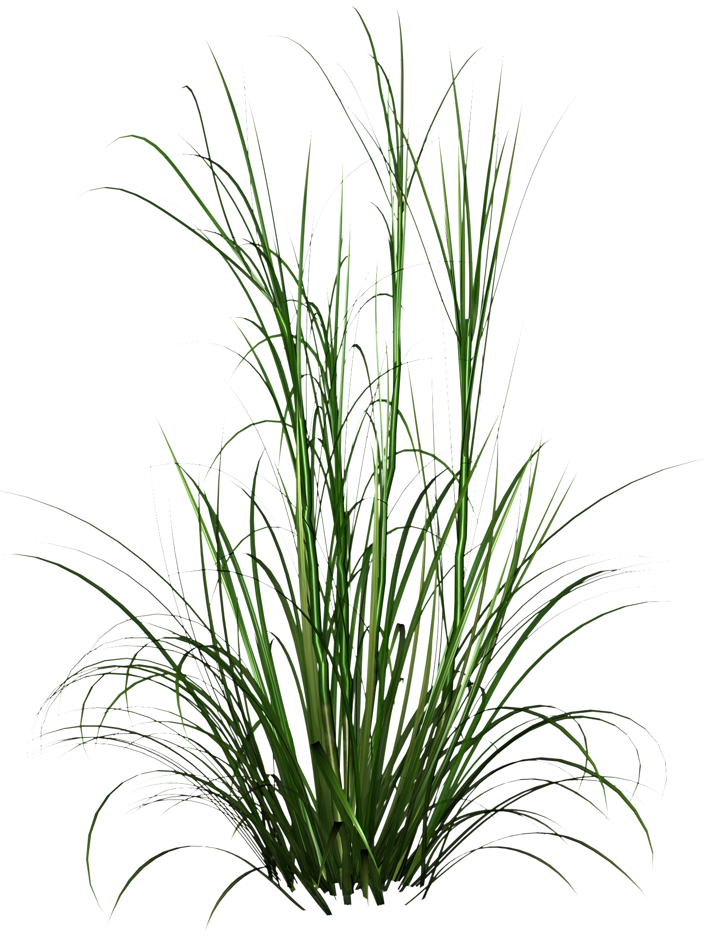 Png images hd. Tall grass photo free