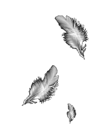 Falling feathers png. Resolved feather effect featherspng